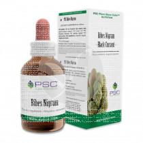 Psc Ribes Nigrum Forzavitale